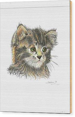 Kitten Wood Print by Bill Hubbard