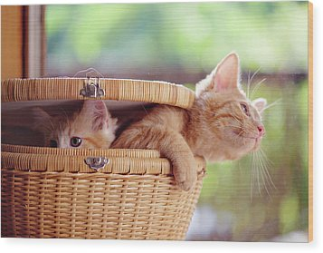 Kittens In Basket Wood Print by Sarahwolfephotography