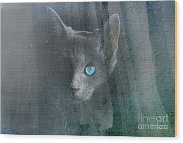 Kitty At The Window Wood Print