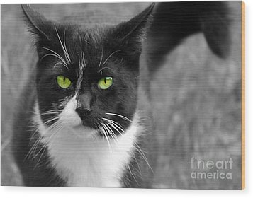 Wood Print featuring the photograph Kitty Fallowing by Lila Fisher-Wenzel