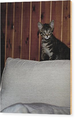 Wood Print featuring the photograph Kitty by Laura Melis