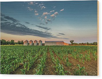 Knee High Sweet Corn Wood Print