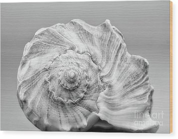 Wood Print featuring the photograph Knobbed Whelk by Benanne Stiens