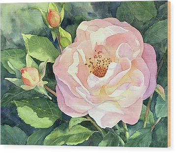 Knockout Rose And Buds Wood Print