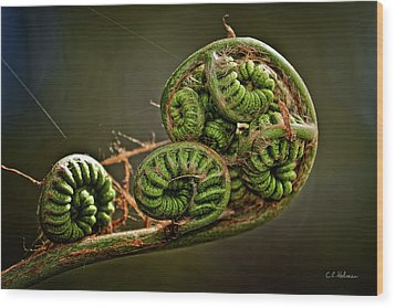 Knotted Wood Print by Christopher Holmes