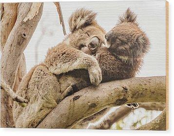 Koala 5 Wood Print by Werner Padarin