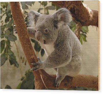 Koala Bear II Wood Print