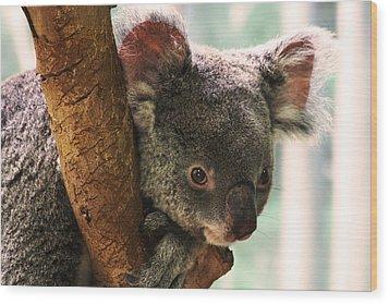 Koala Portrait Wood Print by Brian M Lumley