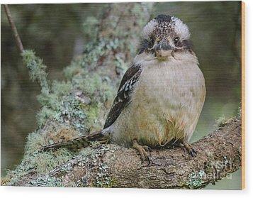 Kookaburra 3 Wood Print