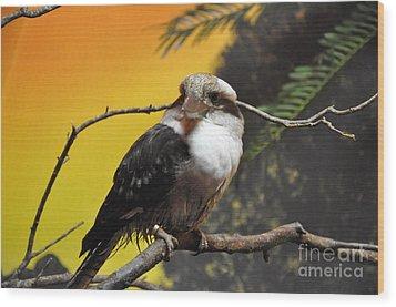 Wood Print featuring the photograph Kookaburra by John Black