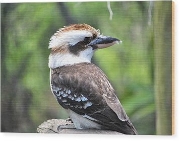 Wood Print featuring the photograph Kookaburra by Laura DAddona