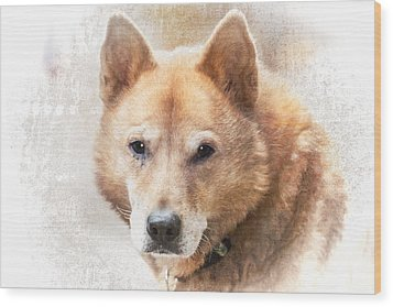 Korean Jindo Portrait Wood Print