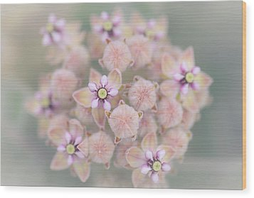 Wood Print featuring the photograph Kotolo Flowers by Alexander Kunz