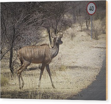 Wood Print featuring the photograph Kudu Crossing by Ernie Echols