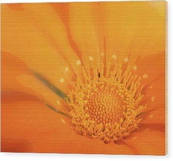 La Fleur D'orange Wood Print