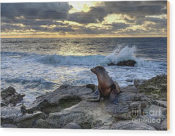 Wood Print featuring the photograph La Jolla Sea Lion by Eddie Yerkish