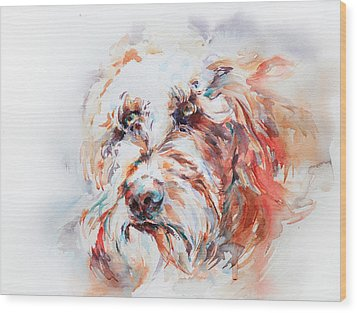 Labradoodle Wood Print by Stephie Butler