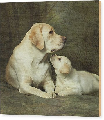 Labrador Dog Breed With Her Puppy Wood Print by Sergey Ryumin