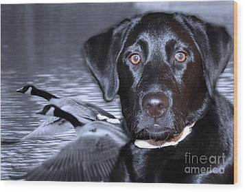 Labrador Retriever Thoughts  Wood Print by Cathy  Beharriell