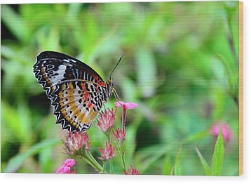 Wood Print featuring the photograph Lace Wing Butterfly by Corinne Rhode