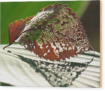 Lacy Leaf Wood Print by Kevin Callahan