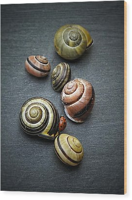 Lady Bug And Snail Shells 1 Wood Print by Karen Stahlros