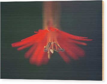 Wood Print featuring the photograph Lady In Red by Alexander Kunz