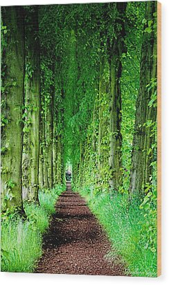 Lady Lucy's Walk Wood Print by Wallaroo Images