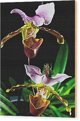 Lady Slipper Orchid Wood Print
