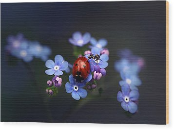 Ladybird And Ant Wood Print by Ellen van Deelen