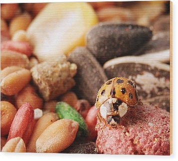 Lucky Ladybug At The Park Wood Print