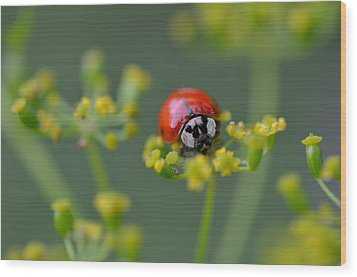 Ladybug In Red Wood Print