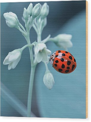 Ladybug Wood Print by Mark Fuller