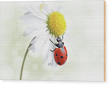 Ladybug On Daisy Flower Wood Print by Pics For Merch