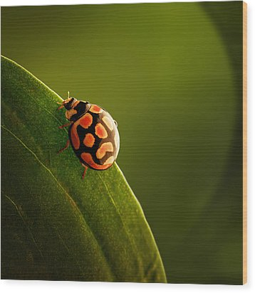 Ladybug  On Green Leaf Wood Print by Johan Swanepoel
