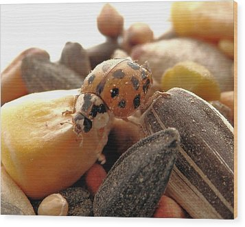 Ladybug On The Run Wood Print by Belinda Lee