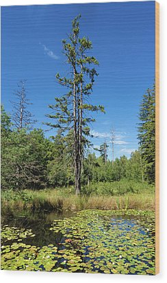 Wood Print featuring the photograph Lake Birkensee Nature Park Schoenbuch Germany by Matthias Hauser