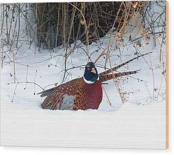 Lake Country Pheasant 2 Wood Print by Will Borden