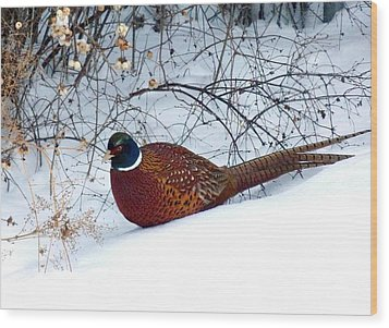 Lake Country Pheasant Wood Print by Will Borden