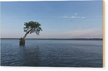 Lake Disston Cypress #2 Wood Print