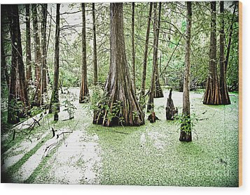 Lake Martin Swamp Wood Print by Scott Pellegrin