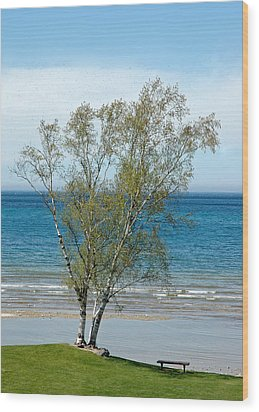 Wood Print featuring the photograph Lake Michigan Birch Tree by LeeAnn McLaneGoetz McLaneGoetzStudioLLCcom