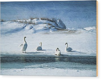 Lake Michigan Swans Wood Print by Dennis Cox