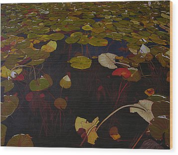 Wood Print featuring the painting Lake Washington Lilypad 7 by Thu Nguyen