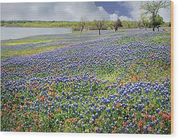 Wood Print featuring the photograph Lakeside Texas Bluebonnets by David and Carol Kelly