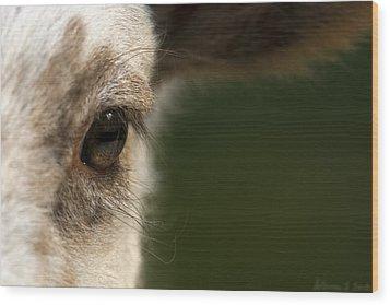 Lamb Eyelashes Wood Print by Warren Sarle