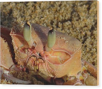 Lamu Island - Crab - Close Up 1 Wood Print