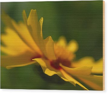Lance Leaved Coreopsis Wood Print by Juergen Roth