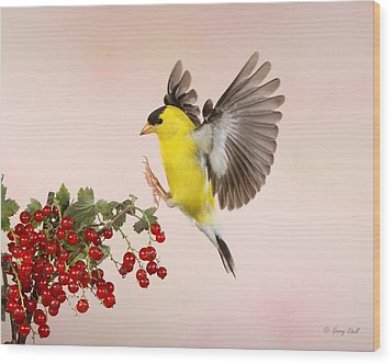 Landing For A Quick Charge At The Currant Bush Wood Print by Gerry Sibell