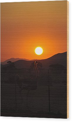 Landscapes - Ostrich Sundown Wood Print by Andy-Kim Moeller